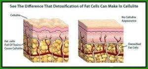 detox fat cells